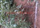 齐全内蒙农田灌溉用PE软带|滴灌带造价