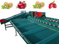 全自动火龙果分选大小的机器, 分选机
