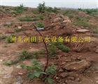 多种陕西西安小管出流PE管价格 周至县苹果滴灌工程