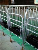 养猪设备保胎定位栏世昌畜牧供应带漏粪板限位栏
