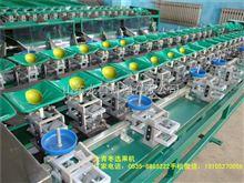 凯祥青枣选果机,市场占有率高达百分之六十