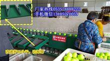 多功能全自动中国台湾青枣分选机,分选青枣大小