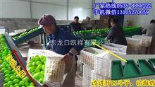 您用过云南凯祥分选机吗?分选水果的好机器,不妨来试试