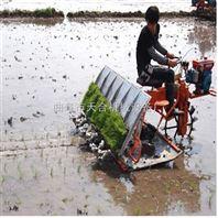 优质水稻插秧机 农业种植机械