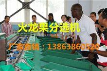XGJ-SZZ分选火龙果大小的机器
