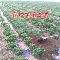 低油耗汽油松土机 质量好操作简单农用铲草机 苗圃除草机