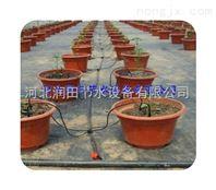 邯郸节能环保花卉滴灌 河北寿命长花卉滴箭
