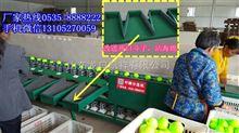 XGJ-QZ青枣分选机-机械称重式青枣分选机-青枣分选机*