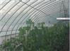 蔬菜大棚跨度厚度材质不同民泰按需定制几字钢大棚骨架