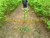 山西果树滴灌|滴水毛管|小管出流系统