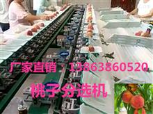 XGJ-SZZ江苏选果机-江苏选果机价格