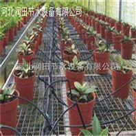 河南盆栽花卉滴箭灌溉效果好 郑州水肥一体化滴箭设备