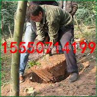 易操作小型挖树机 园林苗木移栽机 链条式起树机直销