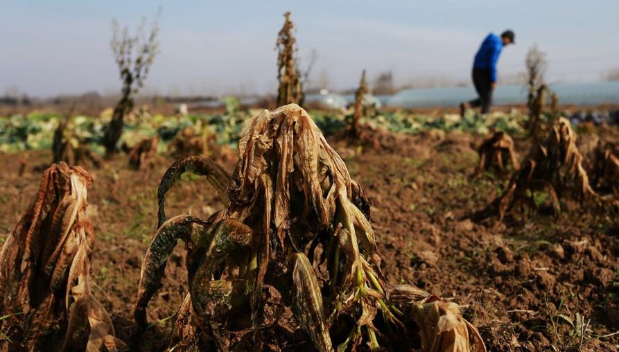 """合肥80后""""海归""""回乡创业 坚持追逐生态农业"""