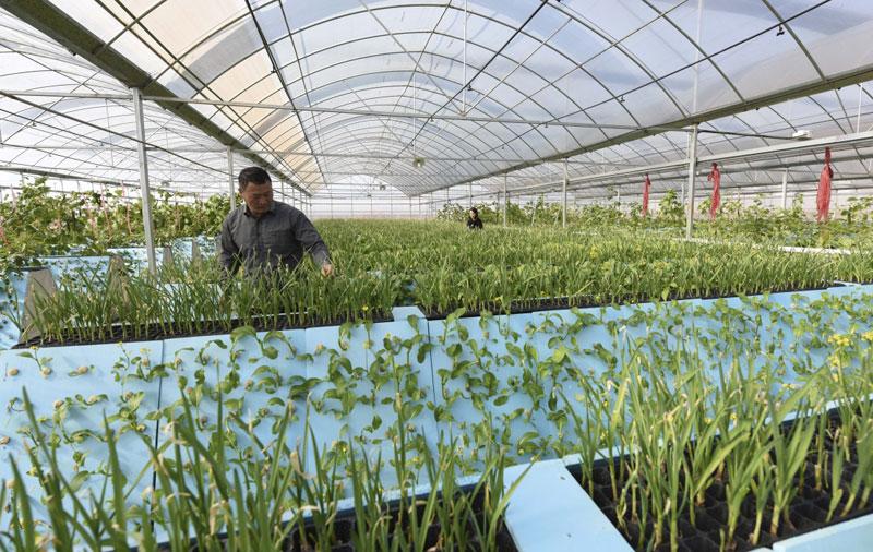 科技创新推动农业产业转型升级