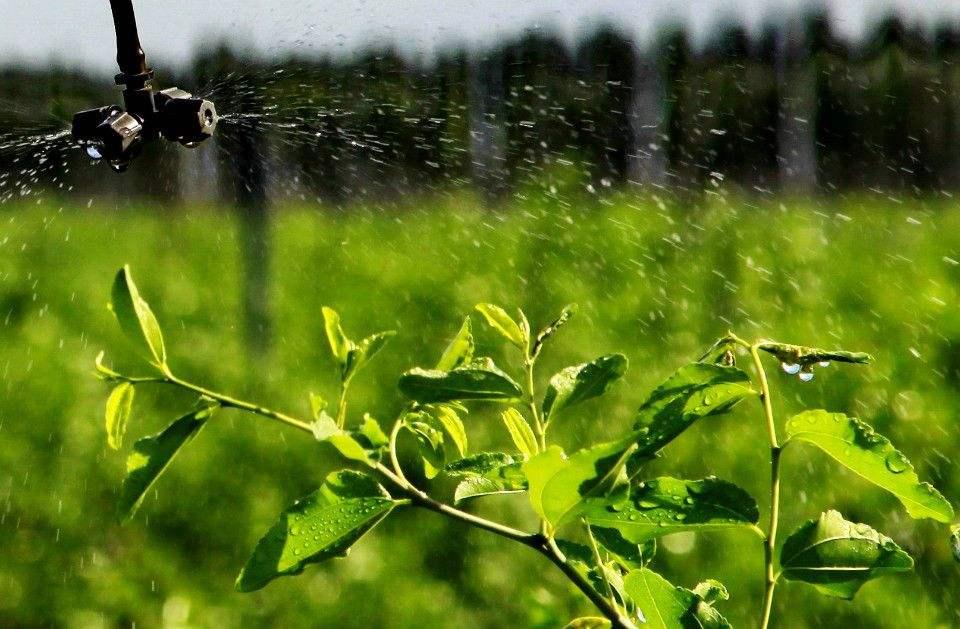 """""""十三五""""全国新增高效节水灌溉面积1亿亩"""