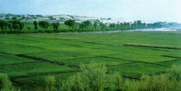农业部的这五大行动将加快推进农业绿色发展