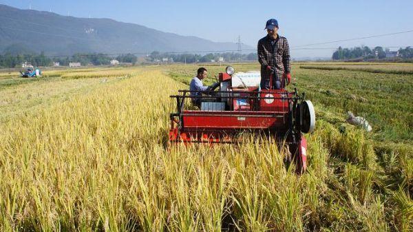 霍山县水稻机收展开 做好跨区作业接待