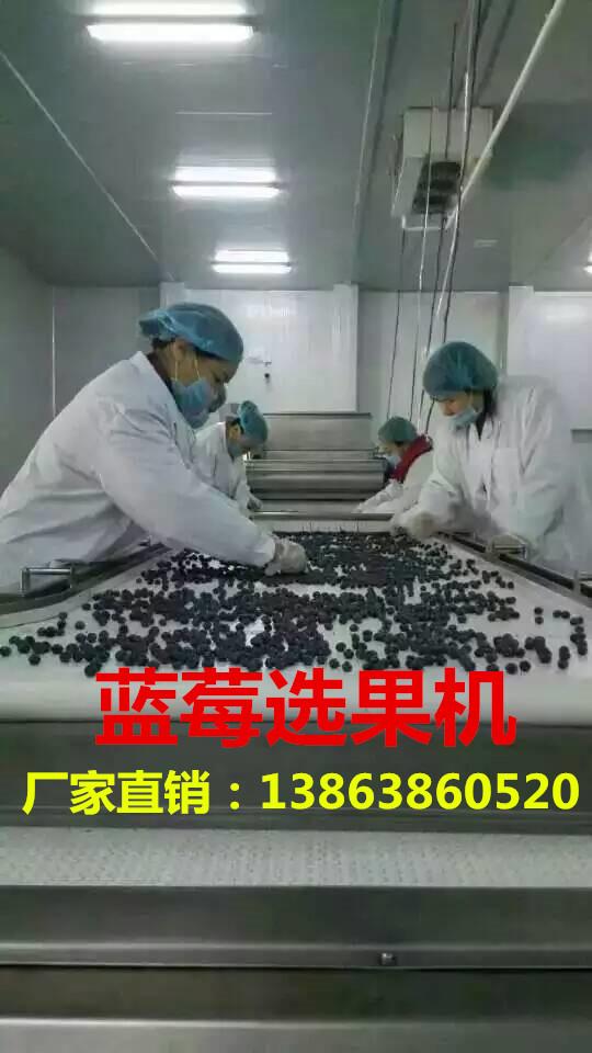 蓝莓分选机